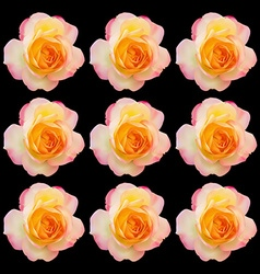 Set of realistic light pink mix yellow rose vector