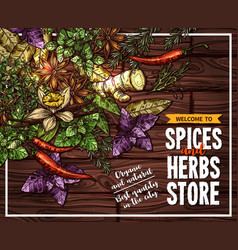 Spice and herb sketch poster on wooden background vector