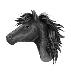 Black mare horse sketch for riding club design vector