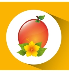fruit apricot flower yellow graphic vector image