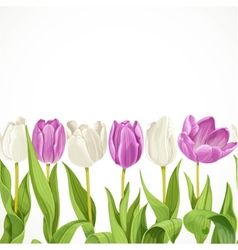 White and purple flowers tulips seamless vector