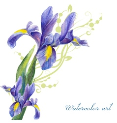 Irises drawing by watercolor vector
