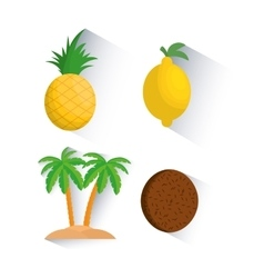 Coconut pineapple fruit and summer concept vector