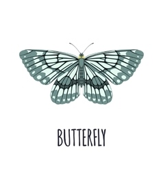Realistic butterfly in flat style vector