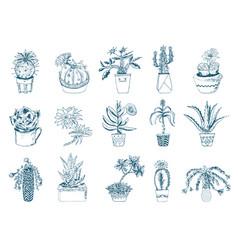 succulents set cactus peyote echeveria vector image