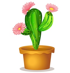 A cactus plant with pink flowers vector image vector image