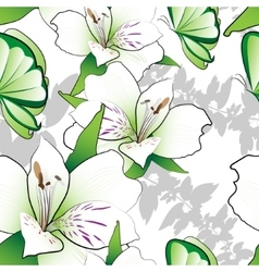 Lilies on a white background vector image vector image