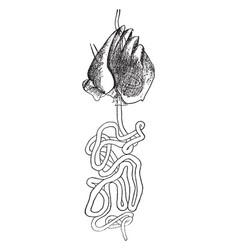 Salivary gland vintage vector