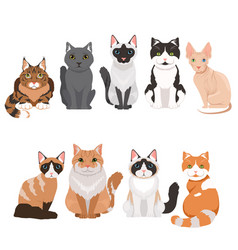 Domestic cats in cartoon style vector