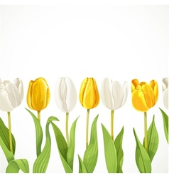 Yellow and white flowers tulips seamless vector