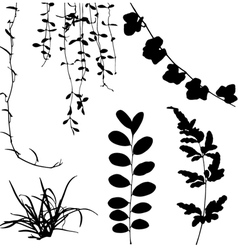Silhouettes of leaf and vine plant vector