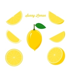Bright set of fresh lemon and juicy lemon slices vector