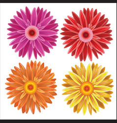 gerbera - set of different colors flowers vector image vector image