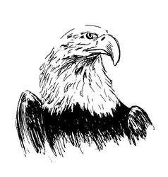 Hand drawing eagle vector image vector image