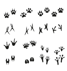 Tracks of wild animals and birds Paw print vector image vector image