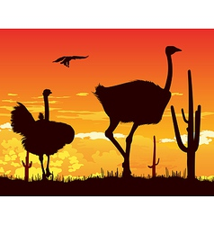 Wild ostriches among the cacti vector