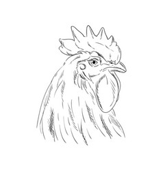 a cock head vector image vector image