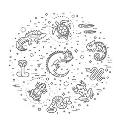 Reptiles and amphibians icons set line design vector