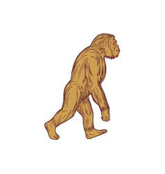 Homo habilis walking side drawing vector