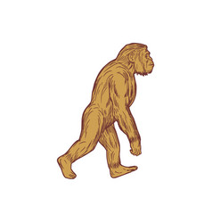 Homo habilis walking side drawing vector