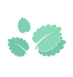 Mint isolated leaves on white background vector