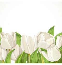 White tulips on white background vector