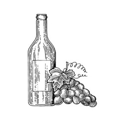 bottle of wine and grapes engraving style vector image
