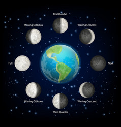 moon phases realistic vector image