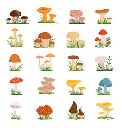 different mushrooms on green grass set vector image vector image