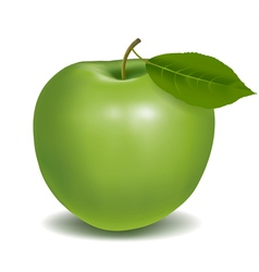 fresh green apple vector image