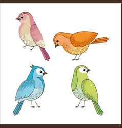 Group of cute birds drawn vector