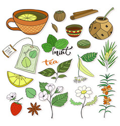 Tea collection herbal plants and elements for vector