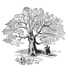 The charter oak vintage vector