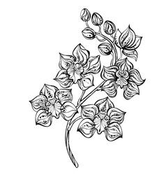 Contour orchid vector