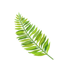 green leaf of tropical palm tree vector image vector image