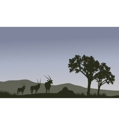 Antelope family silhouette in hills vector