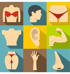 Outer part of body icons set flat style vector