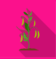 Peas icon flat single plant icon from the big vector