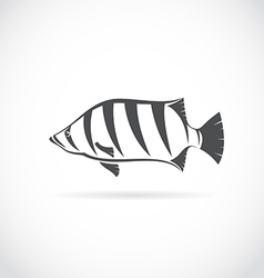 Image of an siamese tiger fish vector