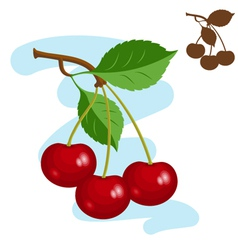 Three juicy cherries vector