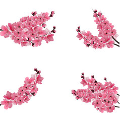 set of flowering branches with a pink cherry buds vector image
