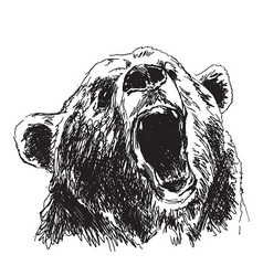 Hand sketch head bear vector