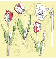 Background with tulip and amaryllis vector image