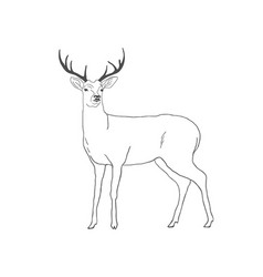hand drawn deer isolated on white background vector image vector image