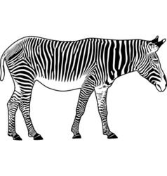zebra contour vector image