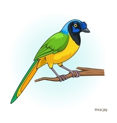 Inca jay bird educational game vector