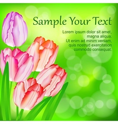 Tulip flowers on green vector image