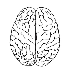 Brain a top view vector