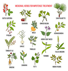 Best herbs for impotence treatment vector