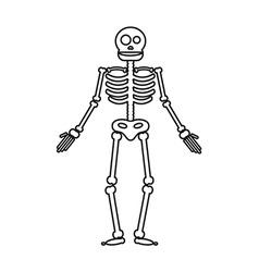 Happy Halloween skeleton vector image vector image